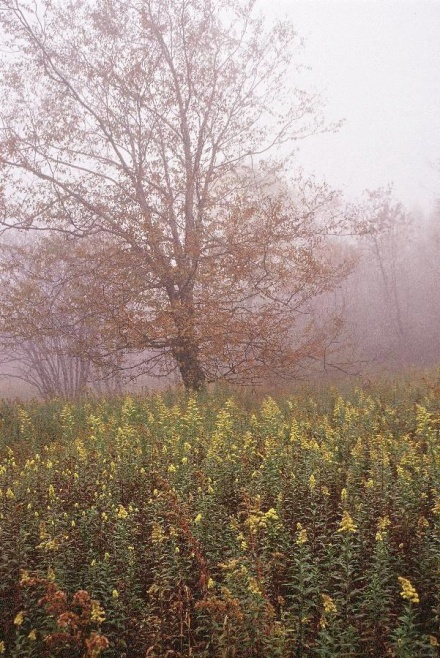 Tree in Graveyard Fields on the Blue Ridge Parkway in late Fall
